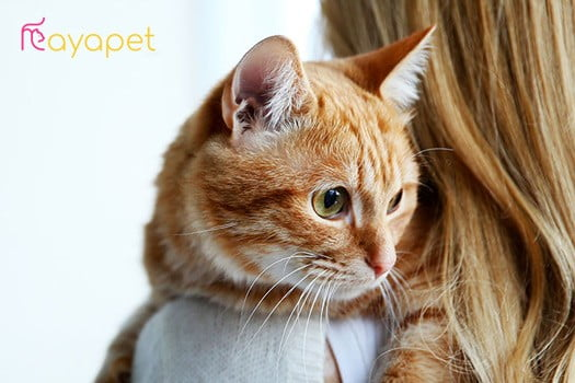 Take-care-of-the-cat-or-buy-it